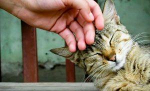 Veterinaria en Irlanda, busca contratar a un acariciador de gatos