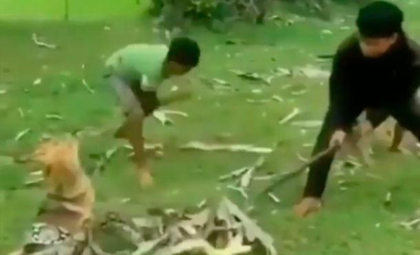 3 valientes niños salvan a un perrito de una enorme serpiente!