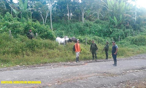 Los retenidos, el ganado y el camión ocupado, fueron entregados a las autoridades correspondientes. / Foto: Ejército de Nicaragua