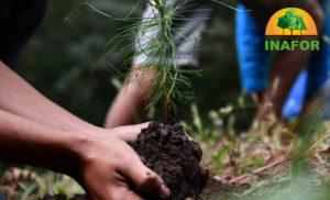 Foto Cortesía: Este 5 de enero el Instituto Nacional Forestal (INAFOR), informó los principales ejes, líneas y planes de acción, que estará desarrollando este año 2021, siempre al servicio del pueblo nicaragüense.