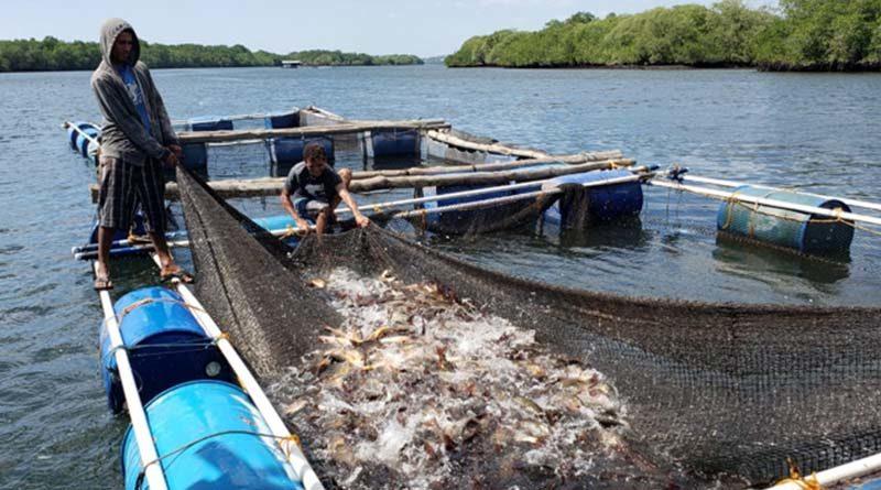 Pescadores de cooperativas de El Viejo desarrollan segunda cosecha de pargo lunajero