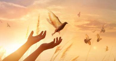 Manos extendidas hacia una paloma blanca, señal de La Paz