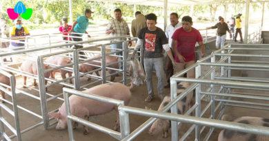 Granja de Mejoramiento Genético Porcino ubicada en el Centro de Desarrollo Tecnológico de la comunidad Campos Azules en Masatepe