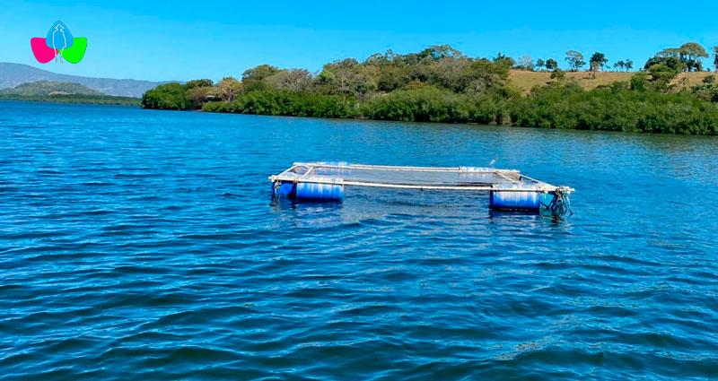 jaulas flotantes de peces