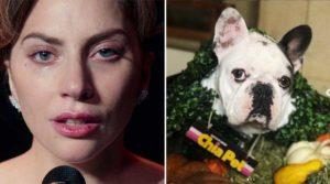 Lady Gaga y uno de sus perritos