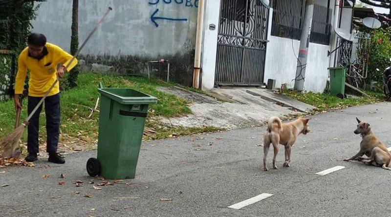 Los dos perritos guardianes junto al barrendero