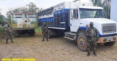 Miembros del Ejército de Nicaragua junto a camiones que transportaban a los semovientes recuperados