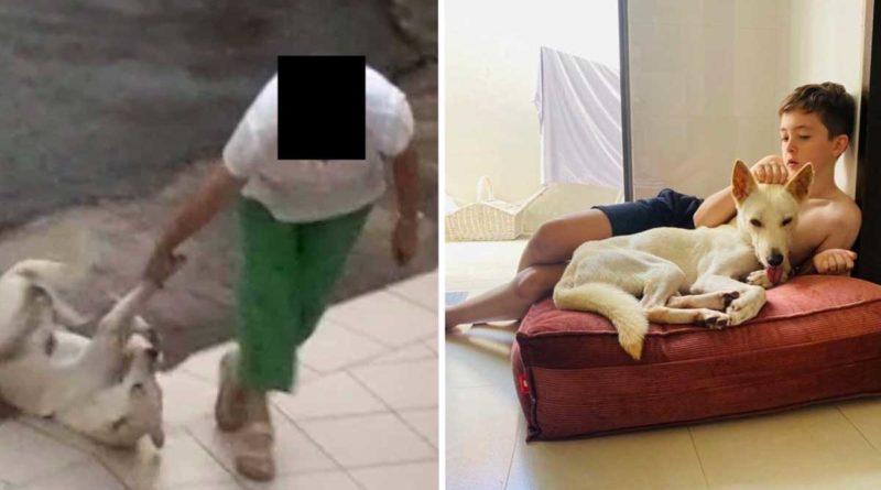 Fotografía de la vida de Lucky antes y después de ser adoptado
