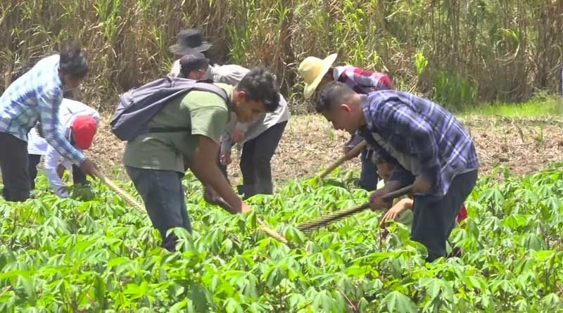 Jóvenes estudiantes de agronomía durante sus clases parcelas didácticas del Centro Tecnológico de Jalapa