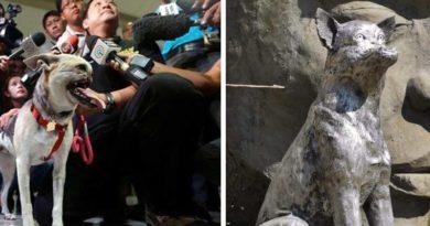 Kabang el perro que perdió su hocico y estatua realizada en su honor