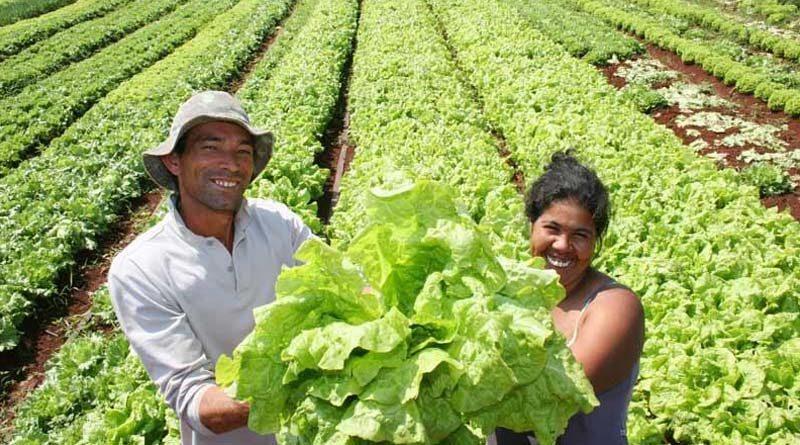 Productores sostiene lechugas en sus manos en un sembradío