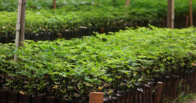 Plantas del vivero departamental en Ocotal