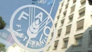 Nicaragua reelecta en consejo de la FAO
