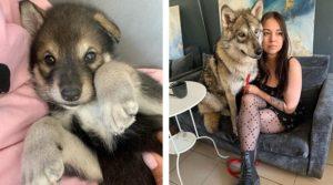 Kira cuando era una cachorrita y Kira junto a Alida ya grande