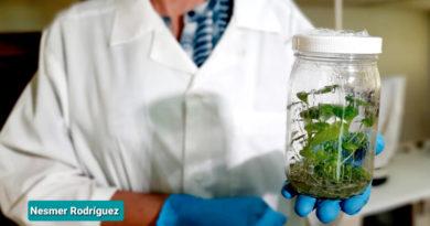 Personal del laboratorio del INTA en Estelí muestra parte de las semillas mejoradas