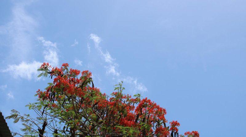 Este viernes estará soleado y probabilidad altas de lluvias en la tarde