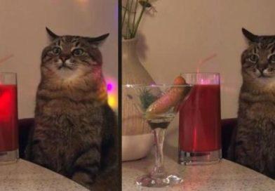 Cómo es ir de fiesta para algunos, este gatito te lo muestra