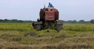 Maquina de cultivo de arroz trabajando en una plantación