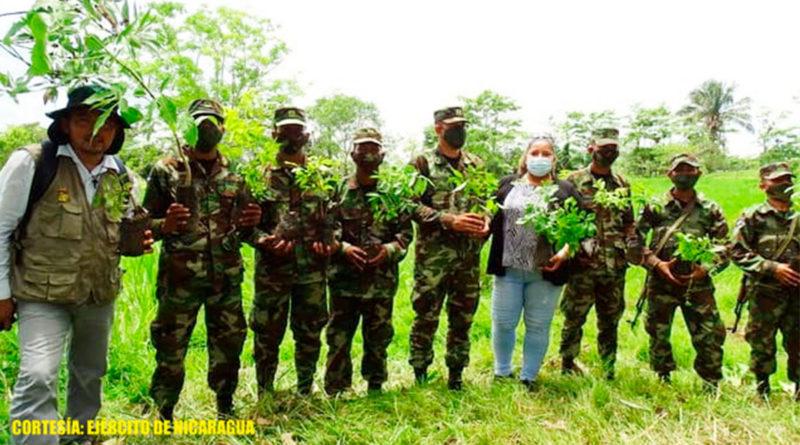 Efectivos militares del Ejército de Nicaragua sembrando árboles en la finca Los Corrales, municipio de El Tortuguero, Región Autónoma de la Costa Caribe Sur.
