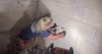 Perrito es rescatado después de pasar 3 días dentro de una pared