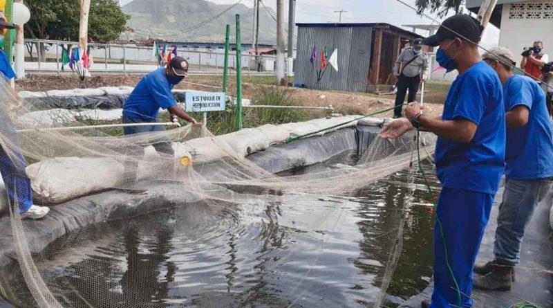 Privados de libertad realizan traspaso de peces en el Sistema Penitenciario de Matagalpa