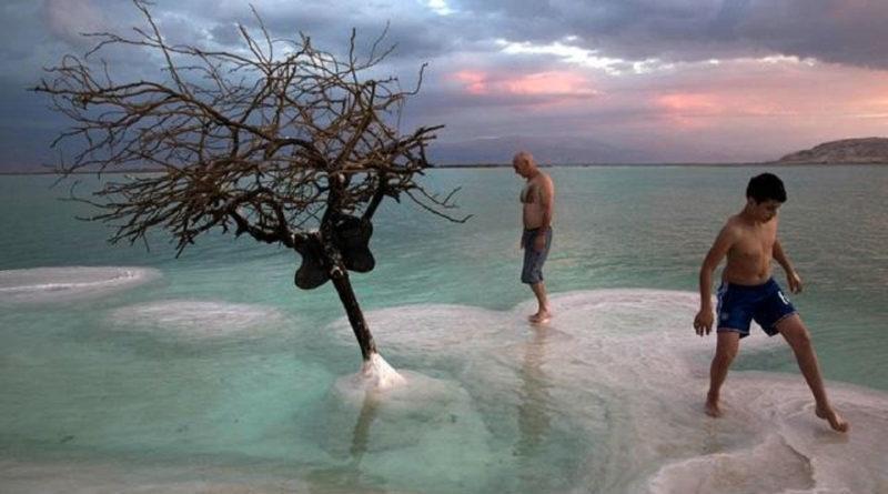 Dos bañistas aprecian un árbol seco en el Mar Muerto