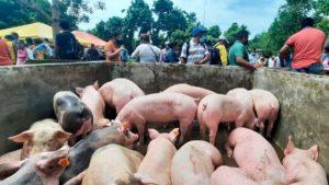 Productores de Masaya recibiendo el bono porcino