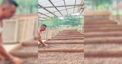 Cooperativista de Las Minas trabajando en el nuevo centro de beneficio de Cacao