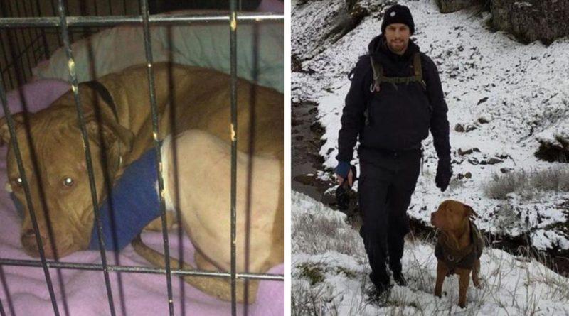 Perrito es rescatado tras ser abandonado en una casa vacía