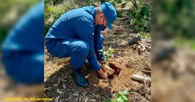 Ejército de Nicaragua participa en jornada de reforestación ambiental